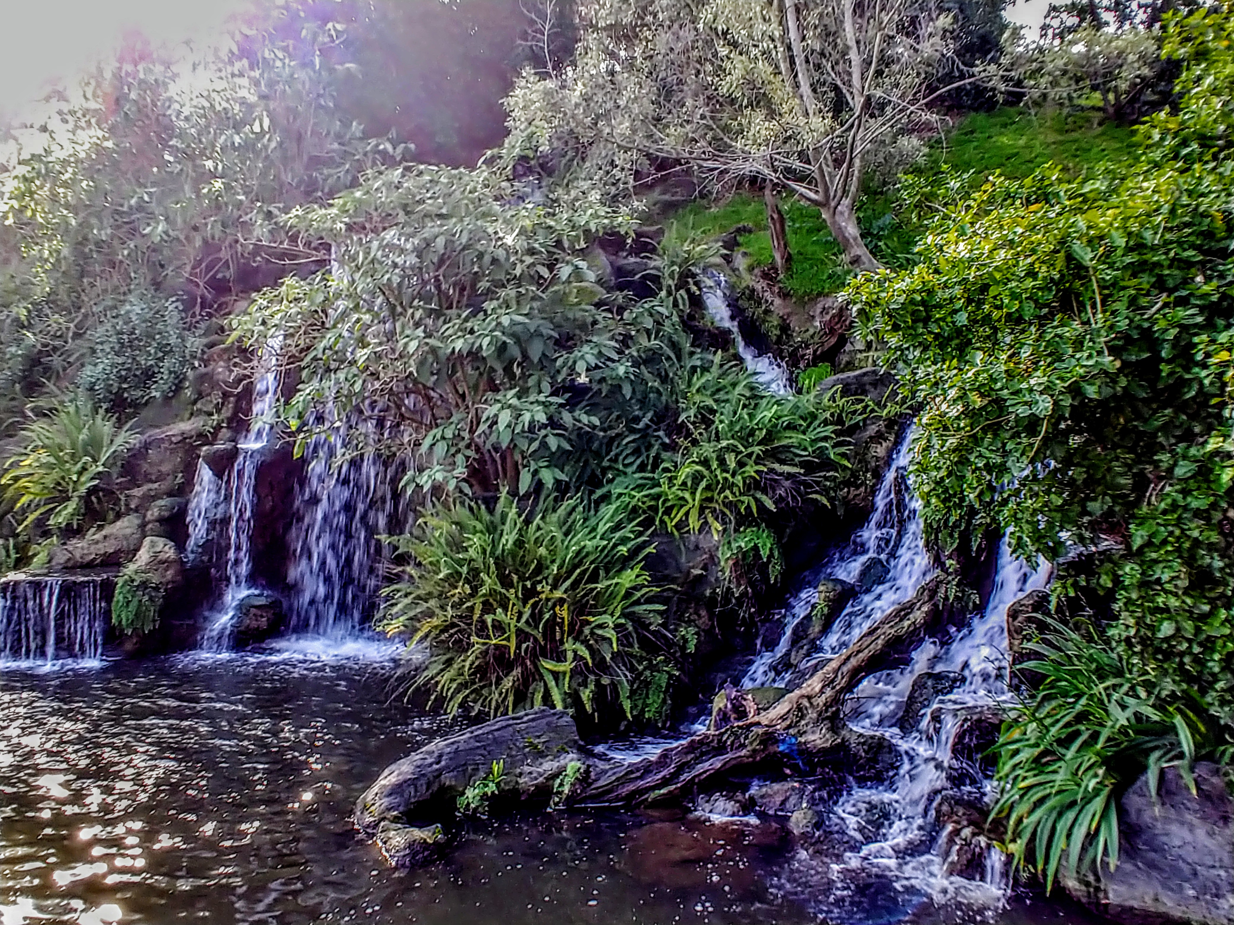 Waterfall at the LA Arboretum